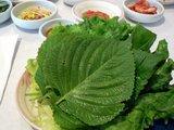 Koreaanse perilla (Perilla frutescens)_