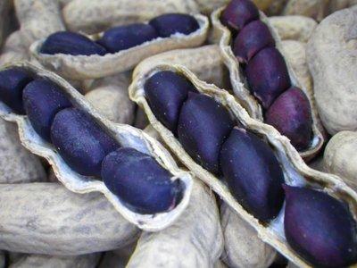 Zwarte pinda (Arachis hypogaea 'Black')